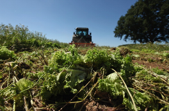 Romaine Lettuce「Farmers Fear Ruin Following EHEC Outbreak」:写真・画像(16)[壁紙.com]