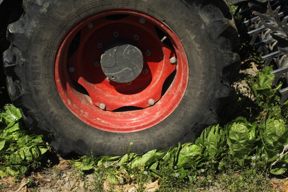 Salad「Farmers Fear Ruin Following EHEC Outbreak」:写真・画像(16)[壁紙.com]