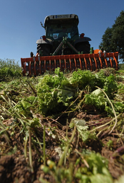 Romaine Lettuce「Farmers Fear Ruin Following EHEC Outbreak」:写真・画像(15)[壁紙.com]