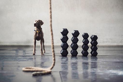 Dog Agility「Dog Activities」:スマホ壁紙(15)