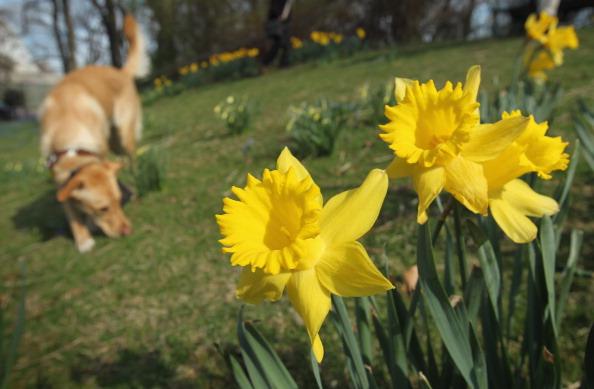 春「Spring Weather Reaches Germany」:写真・画像(2)[壁紙.com]