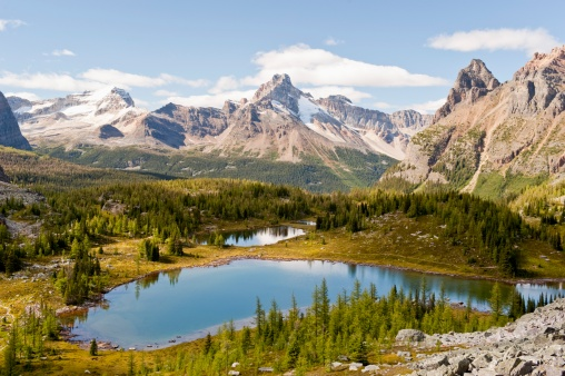Yoho National Park「opabin plateau in lake o'hara region」:スマホ壁紙(11)