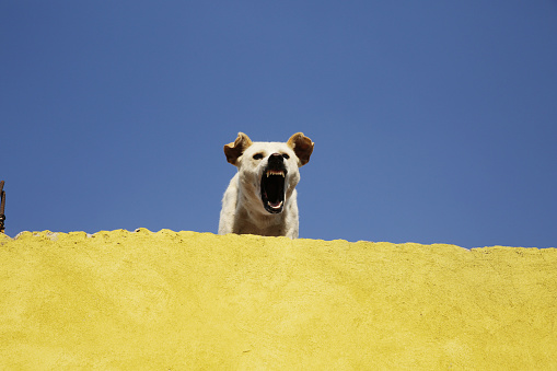 Furious「An angry dog」:スマホ壁紙(15)
