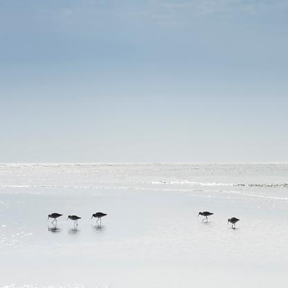 ビーチ「Sandpipers wading in sea」:スマホ壁紙(16)