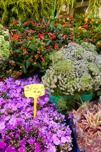 Flower Shop「Variety of flowers for sale in market」:スマホ壁紙(3)
