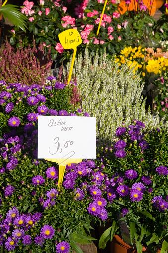 Flower Shop「Variety of flowers for sale in market」:スマホ壁紙(17)