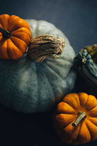 Gourd「Variety Of Gourd, Squash And Pumpkin」:スマホ壁紙(3)