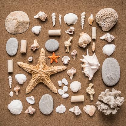 豊富「Variety of seashells on the sand」:スマホ壁紙(11)