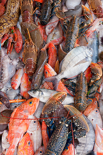 魚「Variety Of Fish On The Fishing Port Of Atlantic Coast」:スマホ壁紙(8)