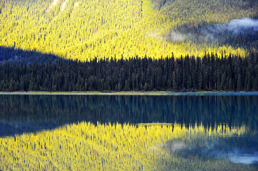 Yoho National Park「Gold colored pine trees , Emerald Lake,Yoho National Park, Canada」:スマホ壁紙(15)