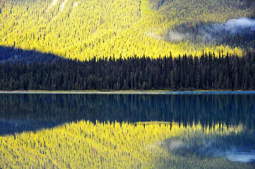 ヨーホー国立公園「金色の松の木、エメラルド湖、ヨーホー国立公園、カナダ」:スマホ壁紙(18)