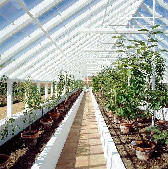 Greenhouse「Kitchen garden, Audley End House and Gardens, Saffron Walden, Essex, c2000s(?)」:写真・画像(19)[壁紙.com]