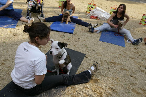 Recreational Pursuit「Yoga Goes To The Dogs In New York」:写真・画像(12)[壁紙.com]