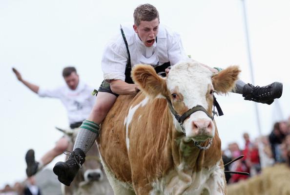 Participant「5th Bavarian Ox-Racing Championships At Muensing」:写真・画像(4)[壁紙.com]