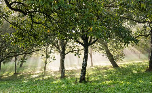 Grove「Walking in the northern Dordogne region of France」:スマホ壁紙(9)
