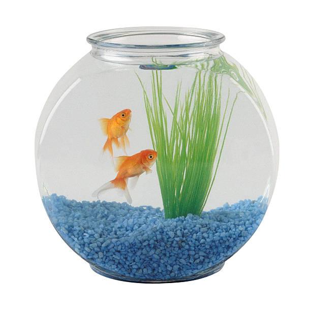 Fishbowl with goldfish:スマホ壁紙(壁紙.com)