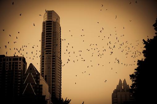 コウモリ「ハロウィーンフリーテール bats オースティンテキサス州)」:スマホ壁紙(15)