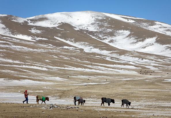 Paula Bronstein「Extreme Mongolian Winter Claims Nomadic Herders Livestock」:写真・画像(1)[壁紙.com]