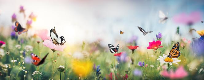Wildflower「Colorful Summer Meadow」:スマホ壁紙(17)