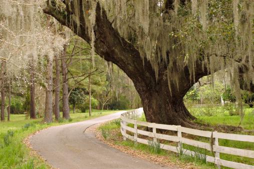 Charleston - South Carolina「Live oak and Spanish moss」:スマホ壁紙(2)