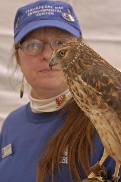 Animals Hunting「Maryland Celebrates The Return Of The Bald Eagle」:写真・画像(1)[壁紙.com]