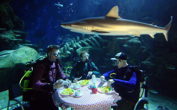 潜水「London Aquarium Divers Eat Underwater Fish Supper」:写真・画像(18)[壁紙.com]