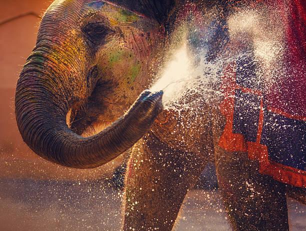 Holi Indian elephant:スマホ壁紙(壁紙.com)