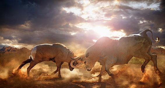 Fighting「Bull and ram fighting in dusty field」:スマホ壁紙(15)