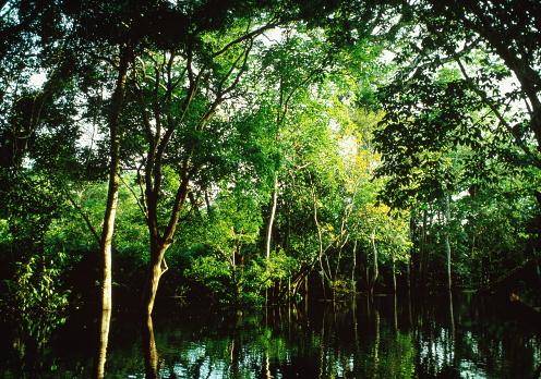 Amazon River「Trees bowing over seasonal high waters, Amazon Jungle, Brazil」:スマホ壁紙(12)