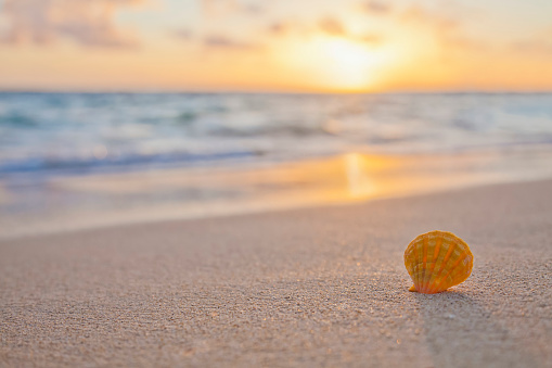 貝殻「A Rare Yellow Orange Hawaiian Sunrise Scallop Seashell, Also Known As Pecten Langfordi, In The Sand At The Beach At Sunrise」:スマホ壁紙(11)