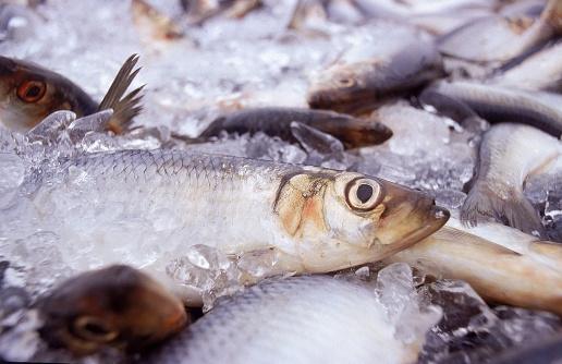 ガラス「Fresh Herring on Ice」:スマホ壁紙(3)