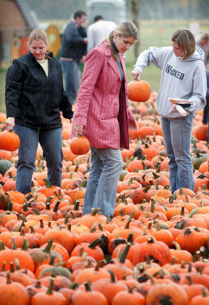 Gourd「Northeast And Midwest Face Halloween Pumpkin Shortage」:写真・画像(2)[壁紙.com]
