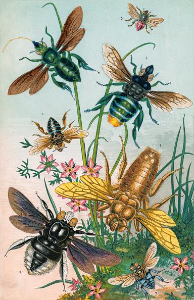 動物「Bees And Their Counterfeits」:写真・画像(6)[壁紙.com]