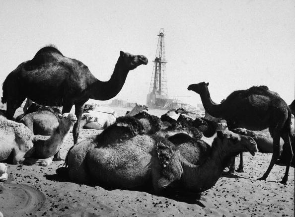 Saudi Arabia「Camels Rest Near Oil Well」:写真・画像(18)[壁紙.com]