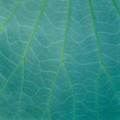 Compatibility「Leaf veins in mint green」:スマホ壁紙(3)
