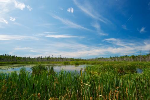 草地「湿地」:スマホ壁紙(4)