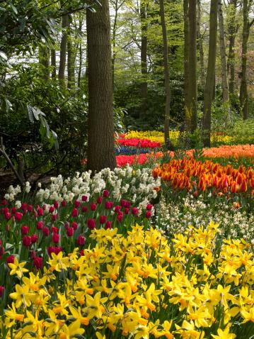 Keukenhof Gardens「Spring Garden」:スマホ壁紙(5)