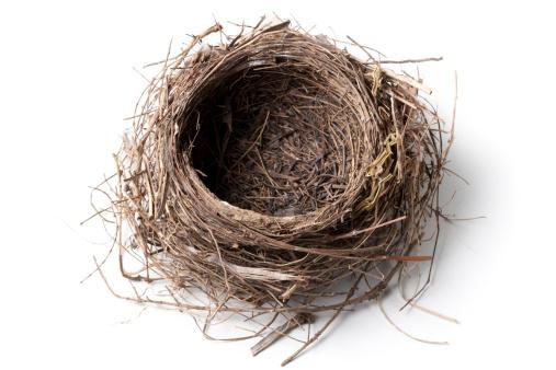 鳥の巣「巣」:スマホ壁紙(4)