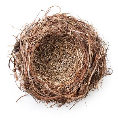鳥の巣「巣」:スマホ壁紙(6)