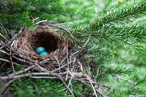 Animal Egg「Bird eggs in a nest in Glacier National Park, Montana.」:スマホ壁紙(16)