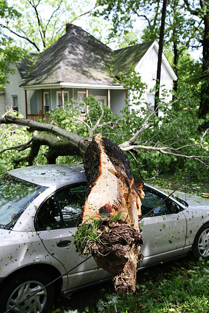 A tree fallen on the roof of a car in front of a house:スマホ壁紙(壁紙.com)