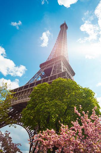 Cherry Blossoms「Spring in Paris - Eiffel Tower and cherry blossom (Paris, France)」:スマホ壁紙(12)