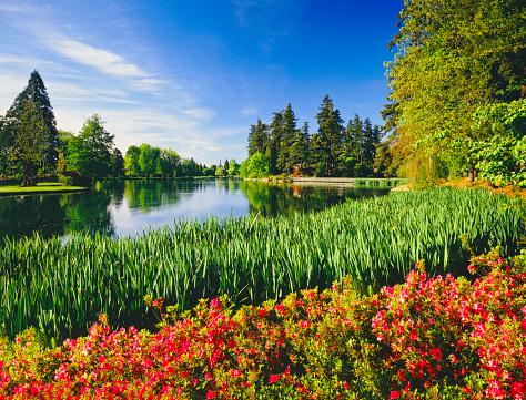 花「春にオレゴン州ポートランド」:スマホ壁紙(7)