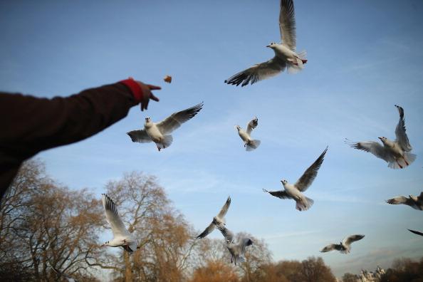 St「Londoner's Enjoy The Winter Sunshine」:写真・画像(6)[壁紙.com]