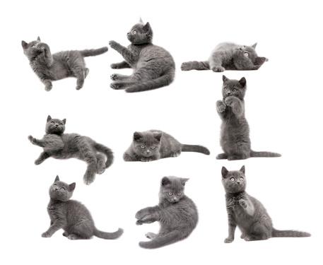子猫「グレイの猫」:スマホ壁紙(16)