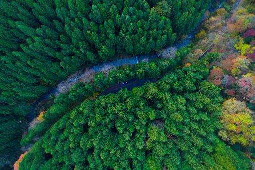 Valley「forest from bird's eye view.」:スマホ壁紙(9)