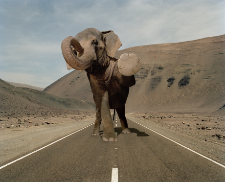 Digital Composite「Elephant halts traffic in a desert road」:スマホ壁紙(0)