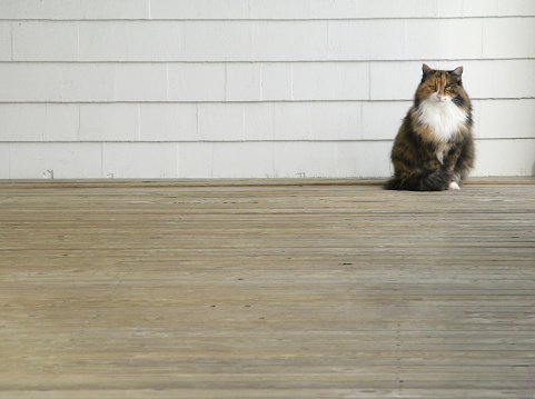 Mixed-Breed Cat「Long Haired Cat in Corner」:スマホ壁紙(5)