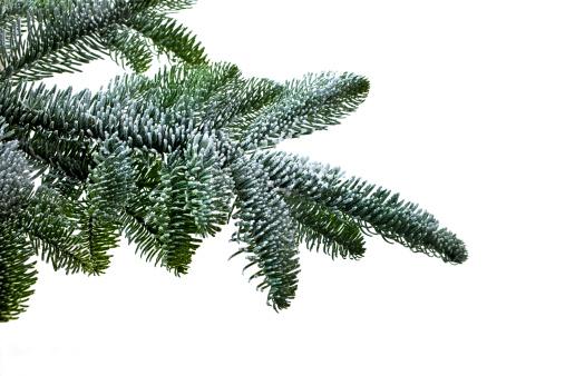 Needle - Plant Part「CHRISTMAS TREE BRANCH」:スマホ壁紙(13)