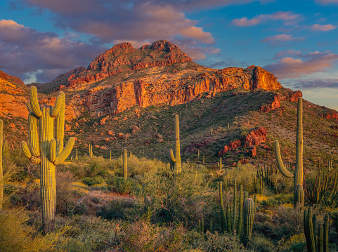 Southwest USA「ORGAN PIPE CACTUS NATIONAL MONUMENT」:スマホ壁紙(5)